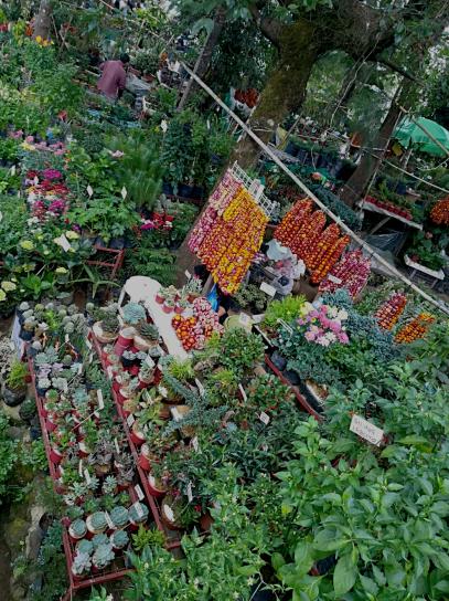 Tiendas de plantas en Mine´s Park
