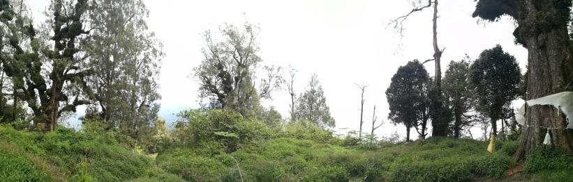 Cima Sanghyang