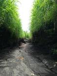 Camino hacia Sanghyang