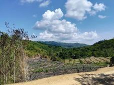 Deforestación en el norte de Palawan