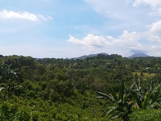 Camino a Sabang en Bellavista