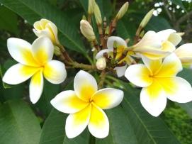 Bonitas flores en el camino