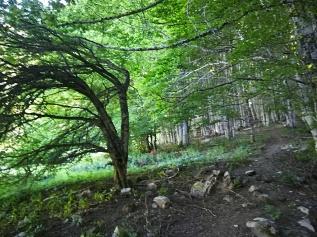2. subida entre el bosque